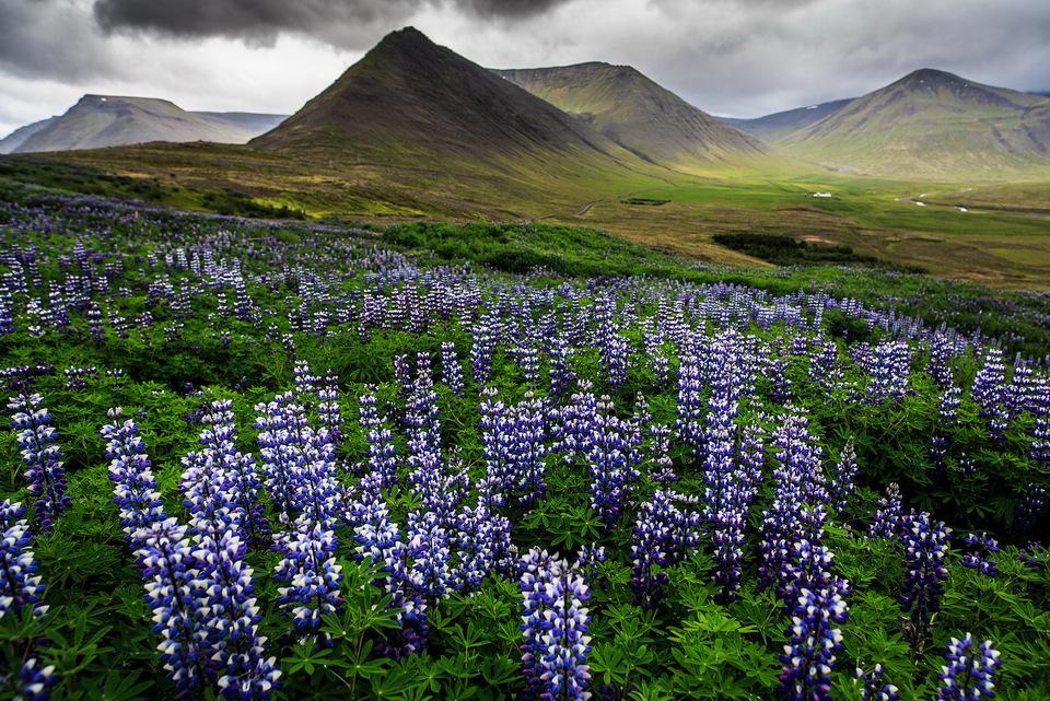野营!去冰岛!